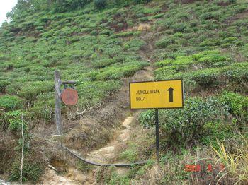 06 trail.jpg