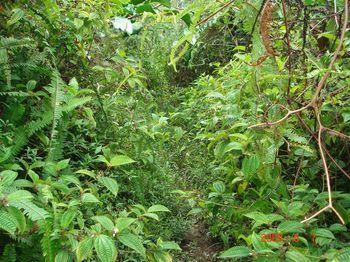 08 trail.jpg