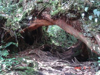 10 trail.jpg