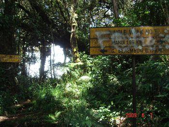 11 trail.jpg