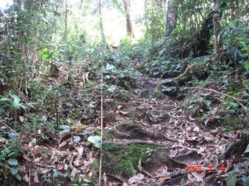 14 path 1 climb.jpg