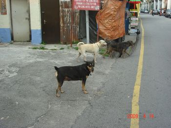 dogs at love lane.jpg