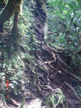 16 path 1 steep climb.jpg